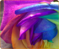 Phthalocyanine Colour Pigments Supplier & Manufacturer In USA